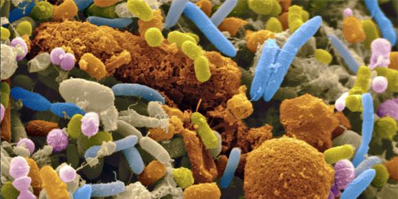 Foto verzameling bacteriën - allemaal beestjes