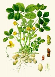 Boek F.E. Köhler met pinda voor de pindakaas