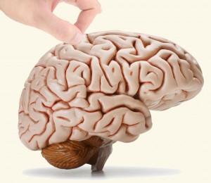 Brainpicking