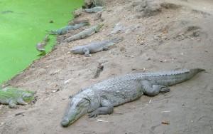 Kachikally krokodillenpool