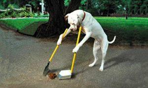 zichzelf uitlatende hond