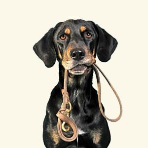 Hondenriem met GPS