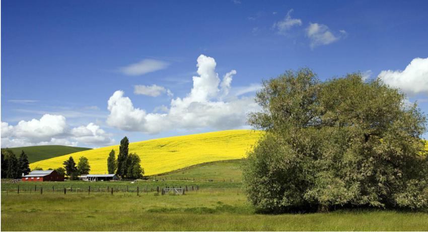 Foto Idaho Farm and Field van Carol M Highsmith