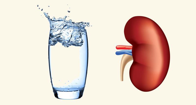 Wetenschap, het water en de nier