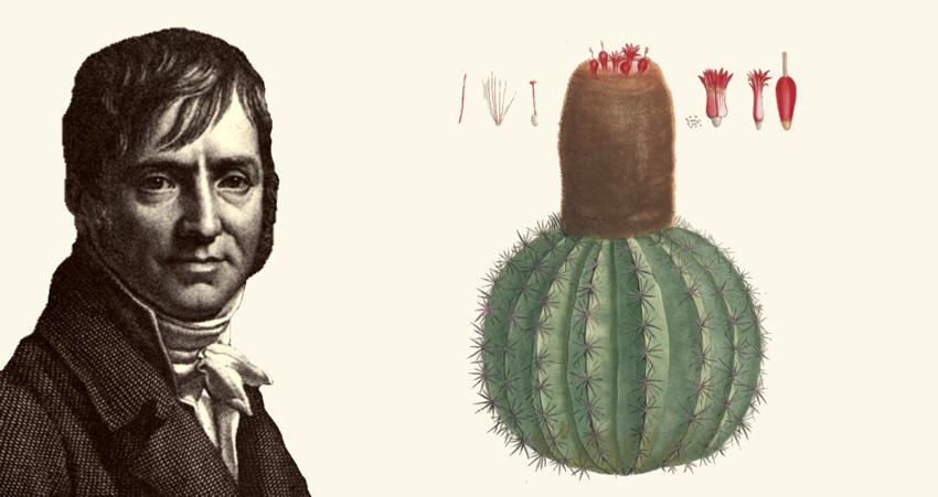 Pierre-Joseph Redouté en cactus