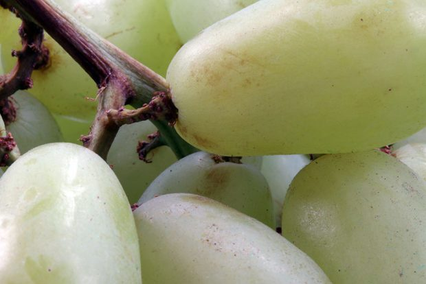 De druiven met pit van Carla