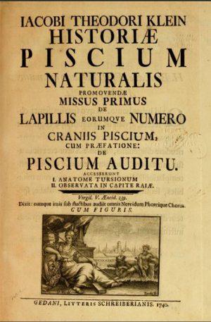 Uitvinder van het tekenen - Naturalis Historia