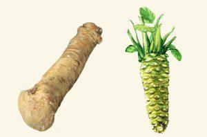 Wasabi is gezond