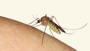 bestrijding van muggen in nederland