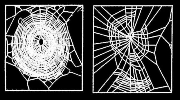 Spinnen met benzedrine