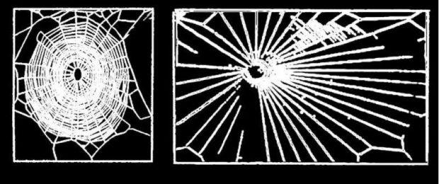Spinnen met LSD