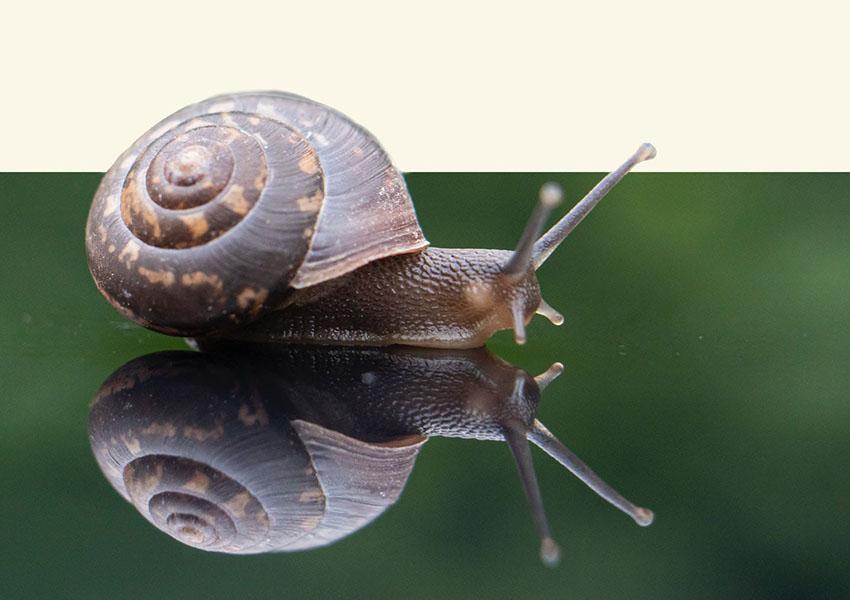 Slakken eten of ervan genieten